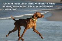 VIZSLA CLUBS / RESCUE CLUBS , HEALTH / Please Help add other Vizsla Rescues