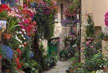 Places To Visit / by Sharon (Ferrari Florist - Santa Cruz, CA) Richardson