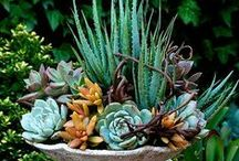 Succulents / by Sharon (Ferrari Florist - Santa Cruz, CA) Richardson