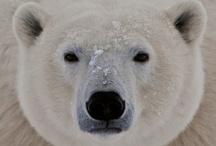 Bears. I like bears.