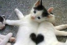 We Love Cats / Adopt a best friend today!