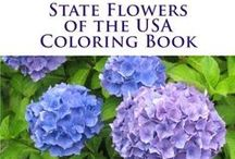 USA State Symbols / Have fun while learning the USA state symbols, including birds, flags, flowers, and state series quarters. https://usa-facts-for-kids.com/state-symbol-coloring-pages/