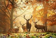fauna / by Divine DeeDee