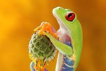 Amazing animals / Amazing animals
