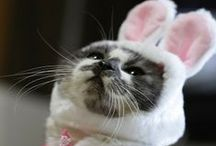Is that you Easter Bunny?