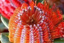 Weird Botanical Wonders / the incredibly beautiful diversity of plants from all over the world.