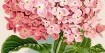 Botanical Prints / Lovely artistry and flowers combined...botanical prints you are going to LOVE!