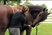 Integrative Therapies / Alternative Therapies for Horses