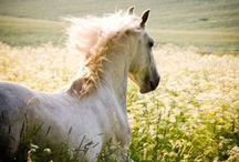 Beautiful Horse Photos / In their natural beauty...they come in all shapes and sizes and colors to be in awe of and.