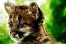 # Lovely animals #