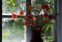 * bloemen buiten vensterbank*