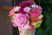 Piękno kwiatów / kwiaty