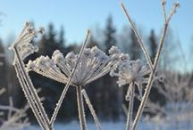 Winter, talvi / I live in Finland and we use to have a very long and snow covered winter, but it is bautiful, too