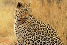 Capricorn Tours / Registered Tour & Safari Operator in Windhoek, Namibia, Africa