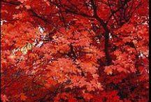 Bossen, bomen en bladeren