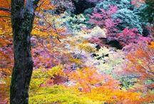 Jardin / Des fleurs, du vert et des couleurs