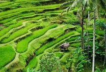 Reizen : Bali / Reizen naar Azië
