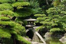 De oosterse tuin / Een tuin in oosterse sferen, met water, stenen en mooie beplanting
