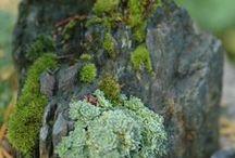 de rotstuin / Een rotstuin bestaat voornamelijk uit planten die geschikt zijn voor droge grond