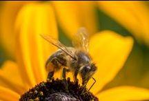 Dieren in de tuin / In de tuin lopen en leven heel veel dieren, die allemaal weer hun sporen nalaten