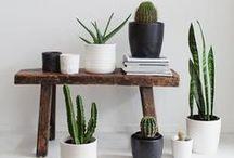 d e s e r t • v i b e s / desert, nature, earthy tones, boho fashion, cactuses