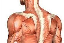 Anatomy & Physiology / Zo ontzettend intelligent als ons lichaam is en werkt. Je kunt er niet zuinig genoeg op zijn!