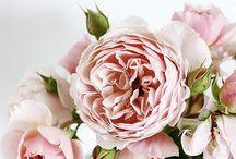 Flores divinas / by Rosas Amorosas