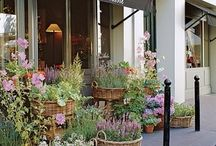 Contained garden / Gorgeous, whimsical container gardens and potting sheds.