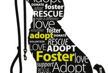 Support dog rescue