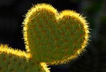 Valentines for Nature Lovers / Hearts, hugs, Love, and a playful embrace of Nature