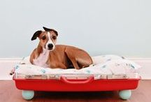 Creative dog beds in your home