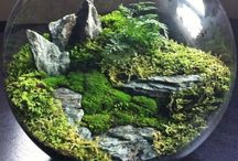 Terrariums and Aquascaping / Miniature worlds on a table top.