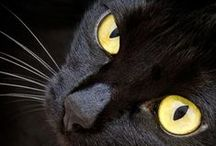 :: Black cat ~ / by Eduardo Godoi