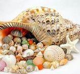 Tropical Seashell Treasures / My website TropicalSeashellTreasures.com