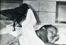 Raven, Crow