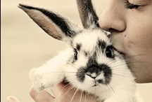 bunbun / for the love of bunnies / by Rene Thompson
