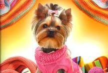 Clothes for dogs, cats - Одежда для собак, кошек / Sewing, knitting, crocheting - Шитье, вязание крючком и спицами