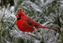 Nature - Природа / Beautiful places, natural phenomena, seasons, birds, wild animals. - Красивые места, природные явления, времена года, птицы, дикие животные.