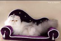 Pets - Домашние любимцы / Photos of animals, houses for cats and dogs, advice on animal care - Фотографии животных, домики для кошек и собак, советы по уходу за животными