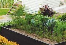 EDIBLE GARDEN / edible garden // food // gardening // design // sustainability // vegetables // fruit
