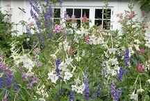 Wildlife-friendly gardening / Working with nature to create a beautiful garden