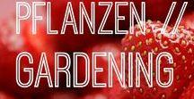 Pflanzen // Gardening / Alles rund um das Thema Pflanzen und Gärtnern