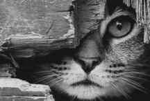Photogenic Feline