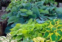 zahradka / rastlinky