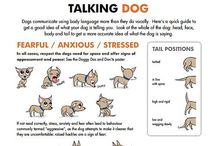 Dog behaviour / Some cute and informative info about dog behaviour