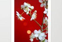 Florales / Blumen und Blüten