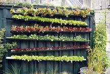 Look at my garden grow