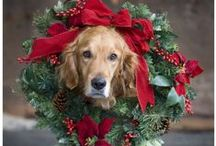 Winter/Christmas / by Chelsea Diamond