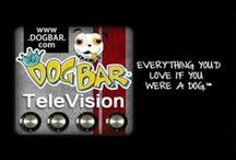 ♥ Dog Bar TV