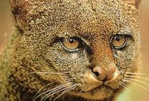 Felidae / by Dog Bar